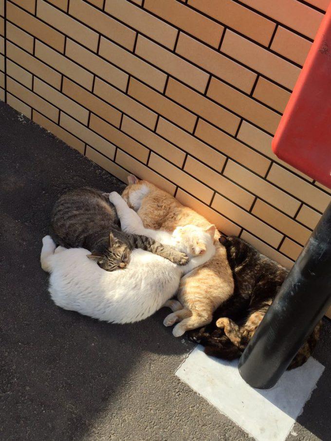 【猫おもしろ画像】猫だまり! セブンイレブンのポスト下で陽だまりする猫たちがかわいい(笑)