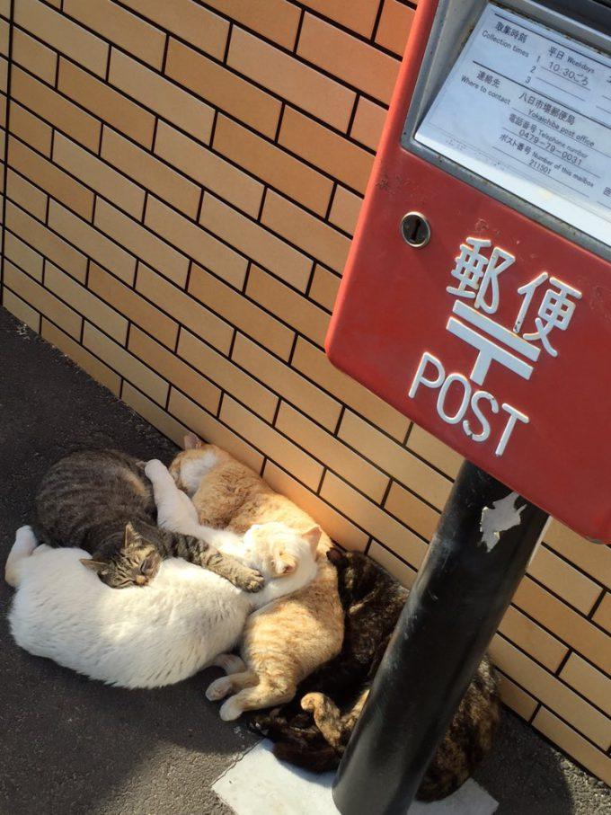 猫だまり! セブンイレブンのポスト下で陽だまりする猫たちがかわいい(笑)