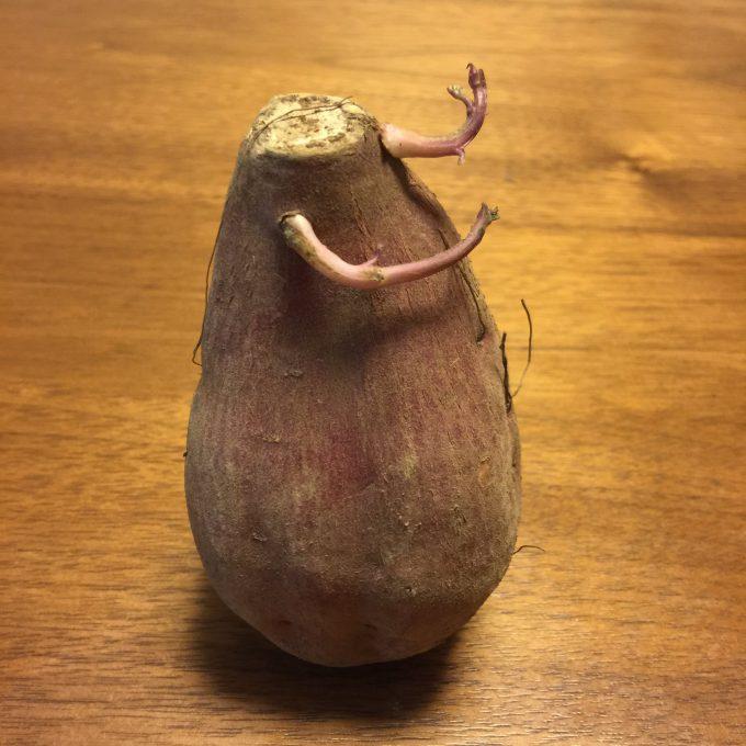 【食べ物おもしろ画像】怪物! ゲームのモンスターに出てきそうな変な形のサツマイモ(笑)