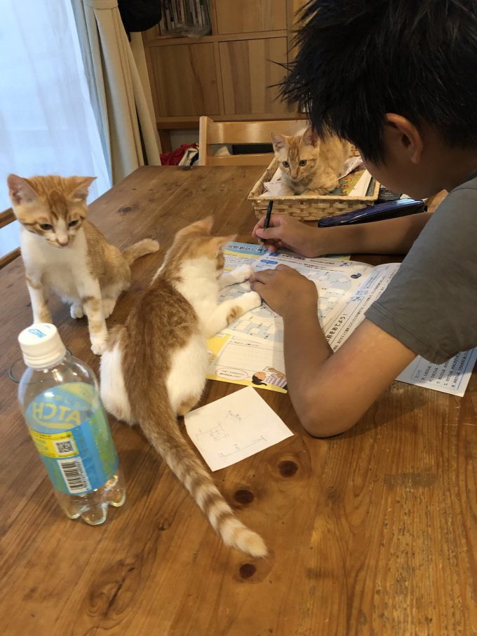 【夏休みの宿題と猫おもしろ画像】手伝うニャ? 夏休みの宿題が終わらない息子を手伝おうとする猫たち(笑)