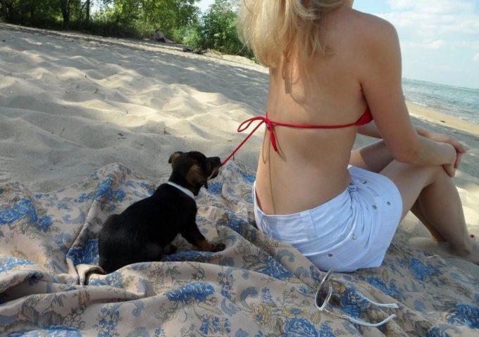 こら! 女性のビキニの紐を後ろから引っ張って脱がそうとする犬(笑)