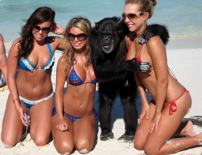【水着女性とチンパンジーおもしろ画像】こら! 美人の水着女性たちに囲まれて調子に乗るチンパンジー(笑)