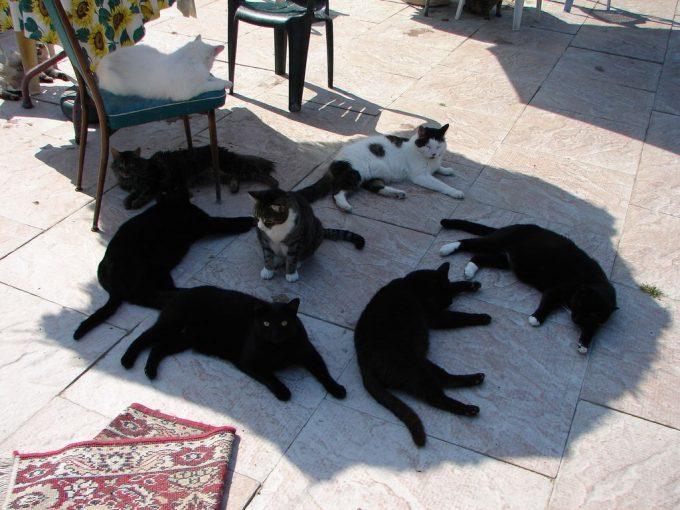 暑すぎるニャン! 暑すぎて日陰で涼む猫たち(笑)