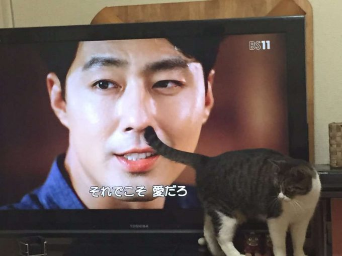 かゆい! テレビでかっこいいシーンが猫のしっぽのせいで台無しに(笑)