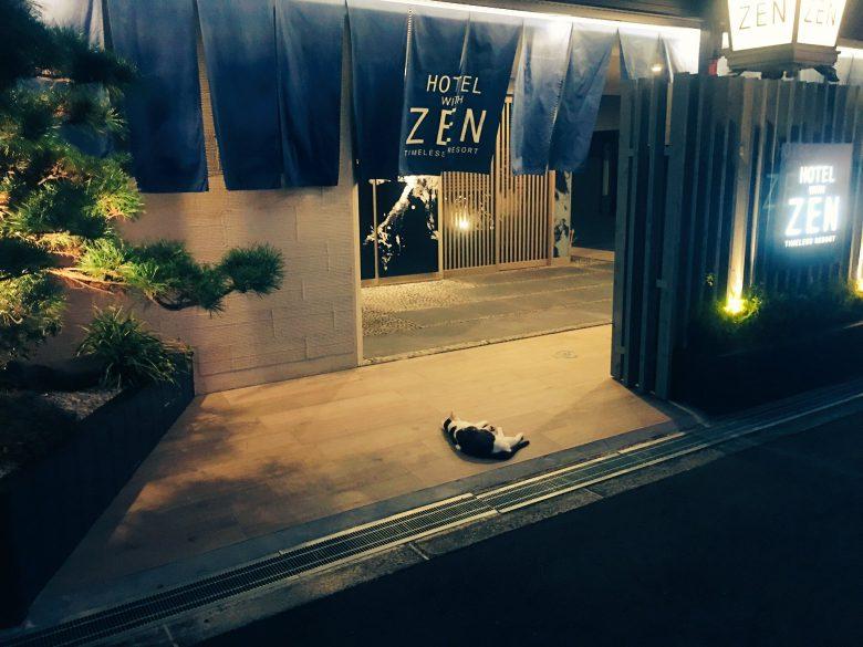 【猫おもしろ画像】ホテルに連れ込もうとして直前でフラれた猫の様子が切ない(笑)