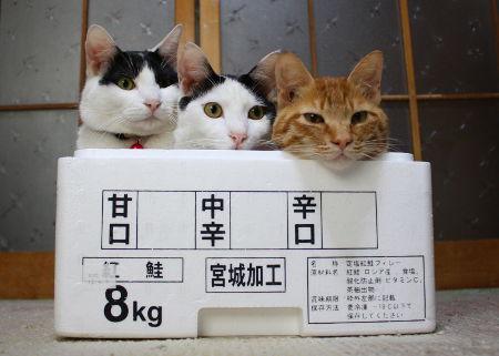 どの味が好み? 宮城で加工された甘口・中辛・辛口猫(笑)