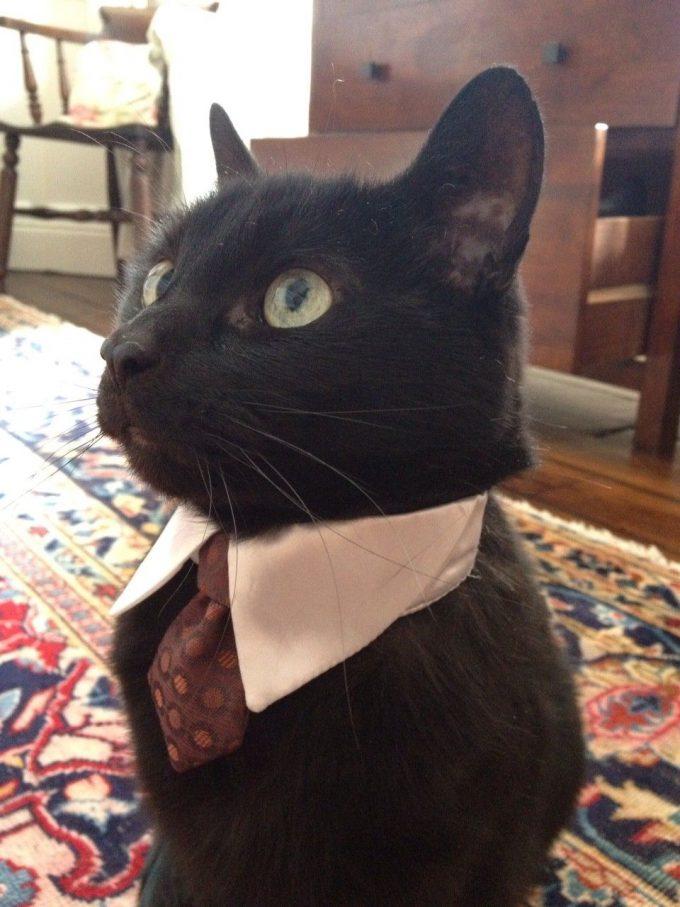 【猫おもしろ画像】イケメン猫! ネクタイしてキリっとしたジェントルマン猫(笑)