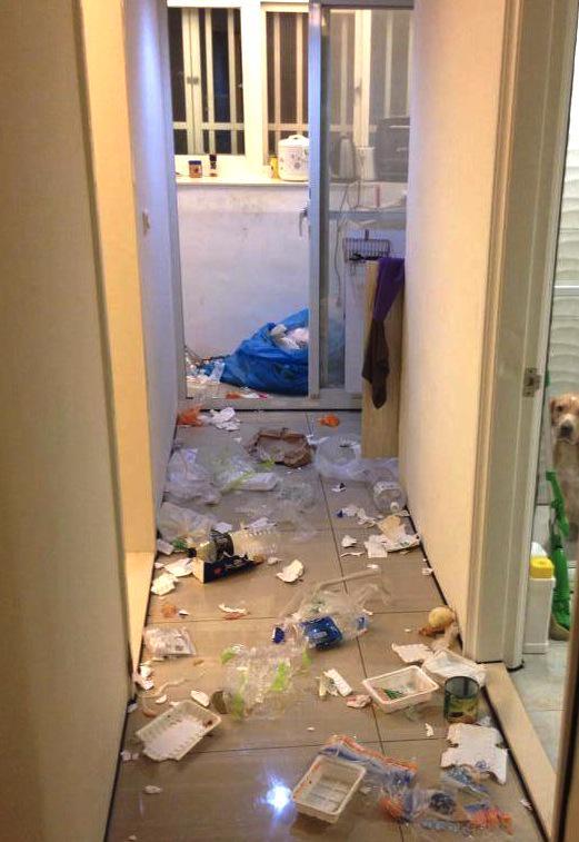 犯人は近くにいる! 部屋をぐちゃぐちゃに散らかして怒られ待ちの犬(笑)