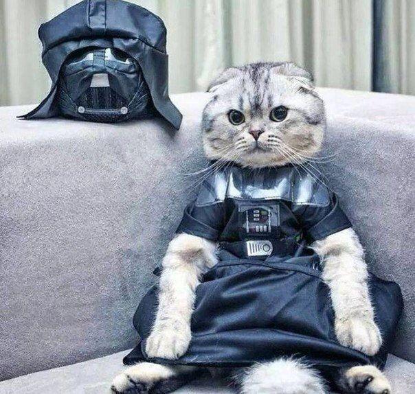 シュゴー! フォースの力を自在に操る猫界最強の戦士、ニャースベイダー(笑)