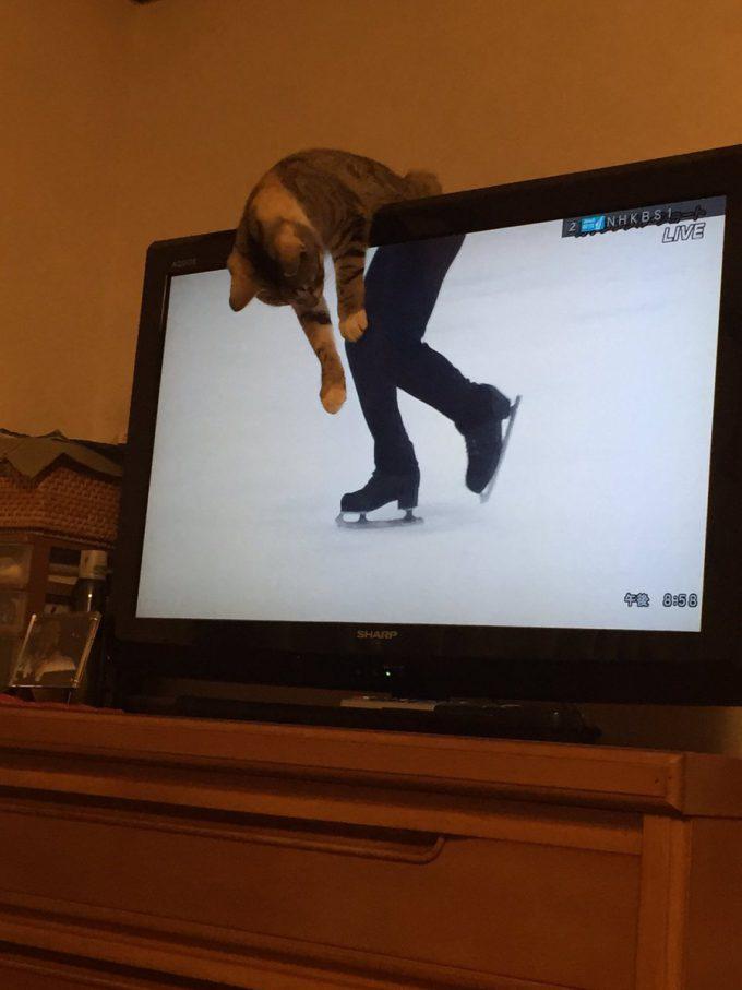 滑るニャ! テレビのスケート選手と合体した猫、アイススケートをする(笑)