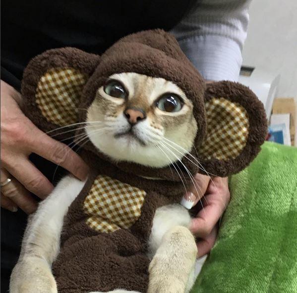 あったかいニャ! 頭がすっぽり収まる帽子を被った猫がかわいすぎ(笑)