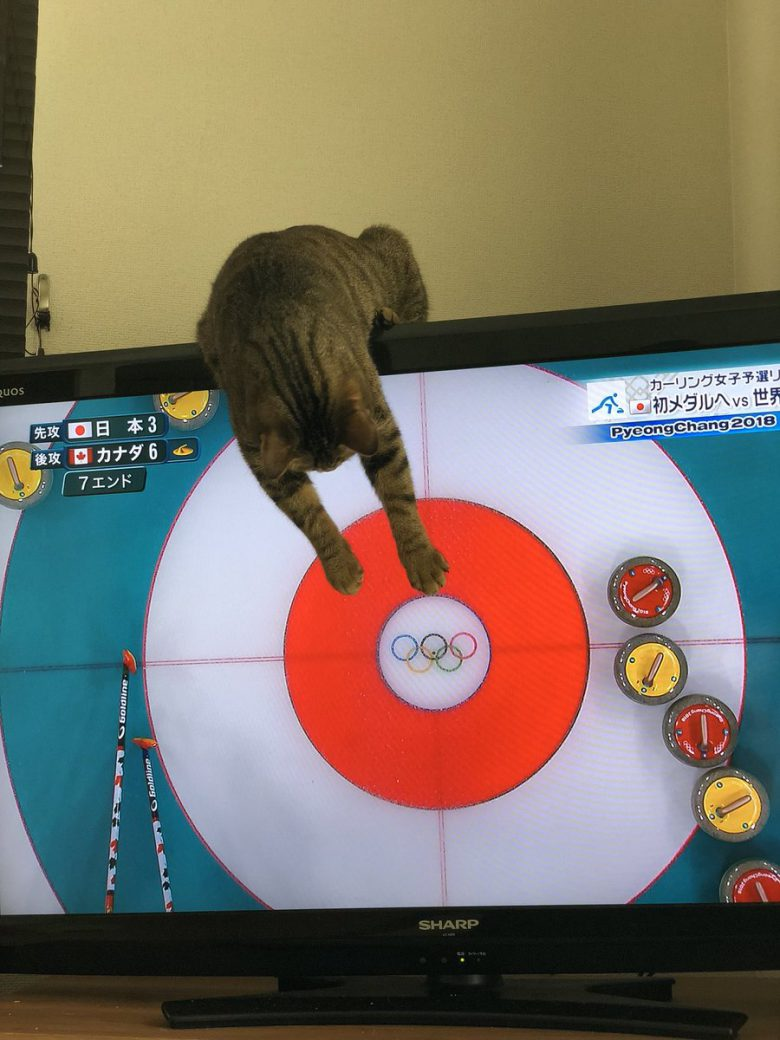 【猫おもしろ画像】2018平昌五輪の女子カーリング試合に参加したい猫がおもしろい(笑)