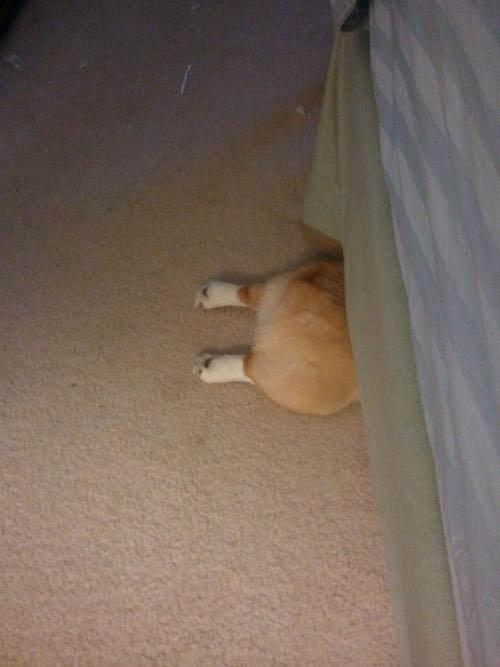 出てるよ! ベッドの下に隠れるコーギー犬のお尻がかわいい(笑)