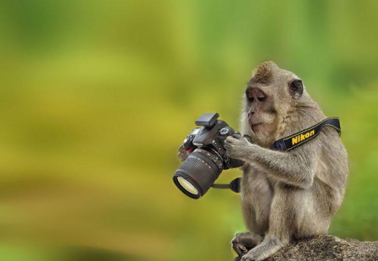 どれどれ? ニコンのカメラで撮影した写真をチェックするお猿さん(笑)