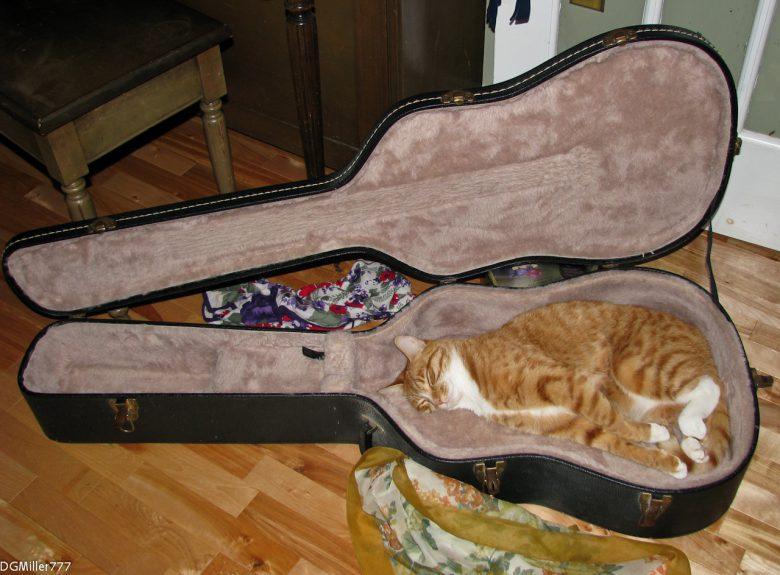 ぴったり! ギターケースをベッド代わりに使う猫が気持ちよさそう(笑)