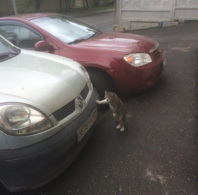 【猫おもしろ画像】駐車場で車に手をついて休憩するおもしろい猫(笑)