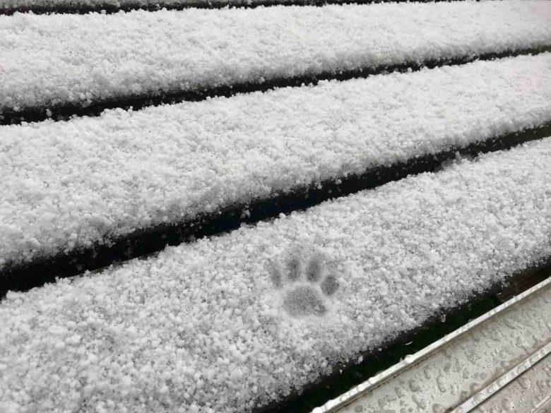 冷たいニャ! 雪に一歩踏み出すも怖気づく猫がかわいい(笑)