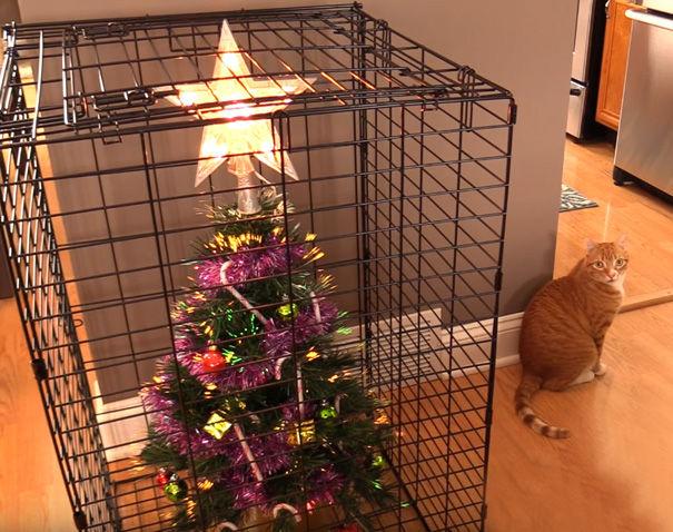 残念! 猫からクリスマスツリーを守るために対策したら、猫がこっちを見てる(笑)
