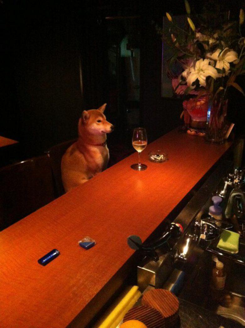 疲れたワン! バーカウンターでしっぽりお酒を楽しむ柴犬がかわいい(笑)