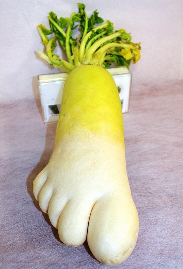 変な形の野菜! 人間の足の形をした大根(笑)