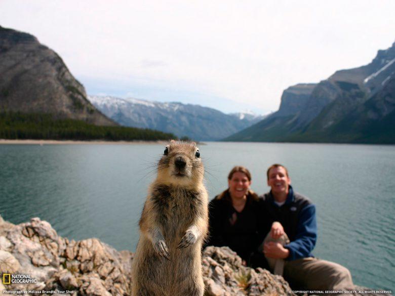記念写真を撮影しようとしたら、好奇心旺盛な動物がカメラの前に現れた(笑)