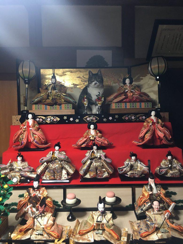 偉い猫! ひな祭りのひな壇でお内裏様とお雛様の真ん中に立つ猫(笑)