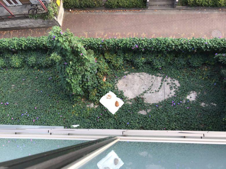 暖かいニャ!マンション4階で干してた布団が落ちたので見てみたら(笑)