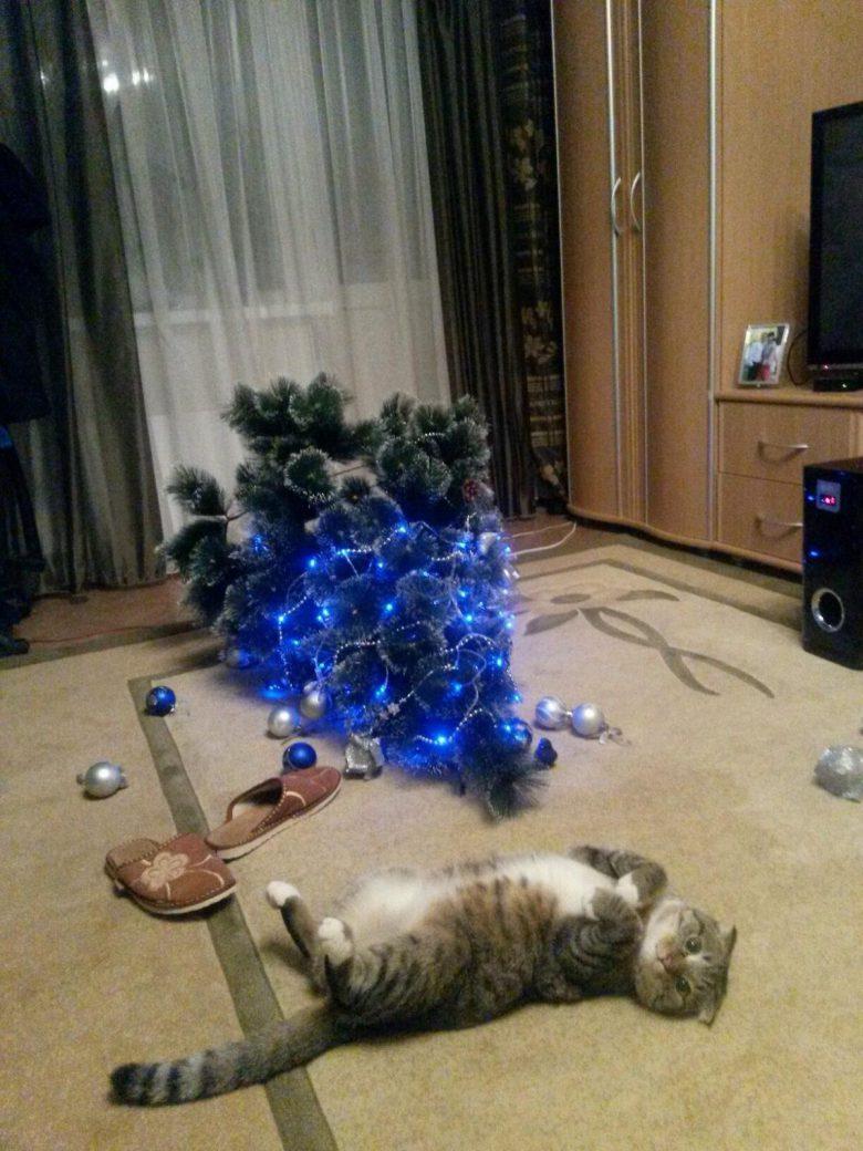 許してニャ! クリスマスツリーを倒しちゃった猫、かわいさで許しを請う(笑)