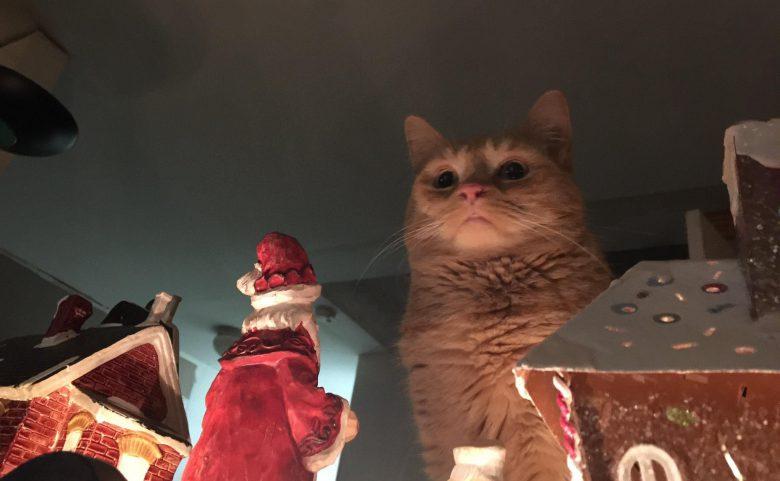 【猫おもしろ画像】この後、間違いなく巨大猫にやられてしまいそうなサンタクロース(笑)