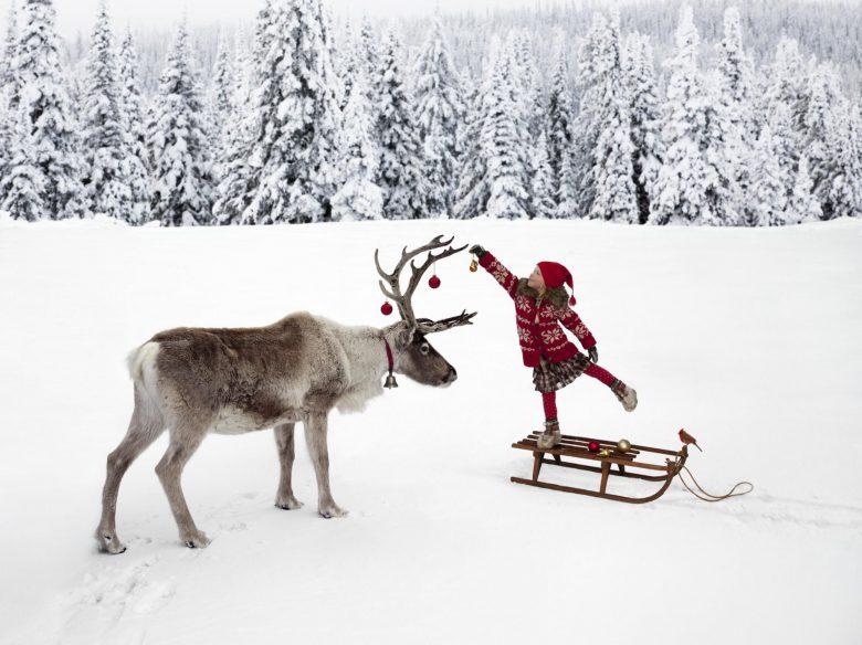 はい! トナカイの角にクリスマスデコレーションしてあげる優しい子ども(笑)