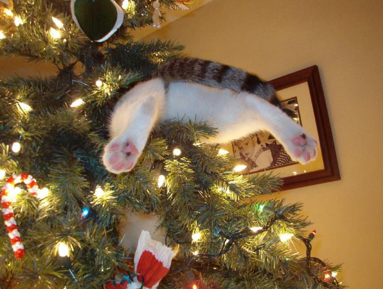 嬉しすぎてクリスマスツリーにダイブするおもしろい猫(笑)