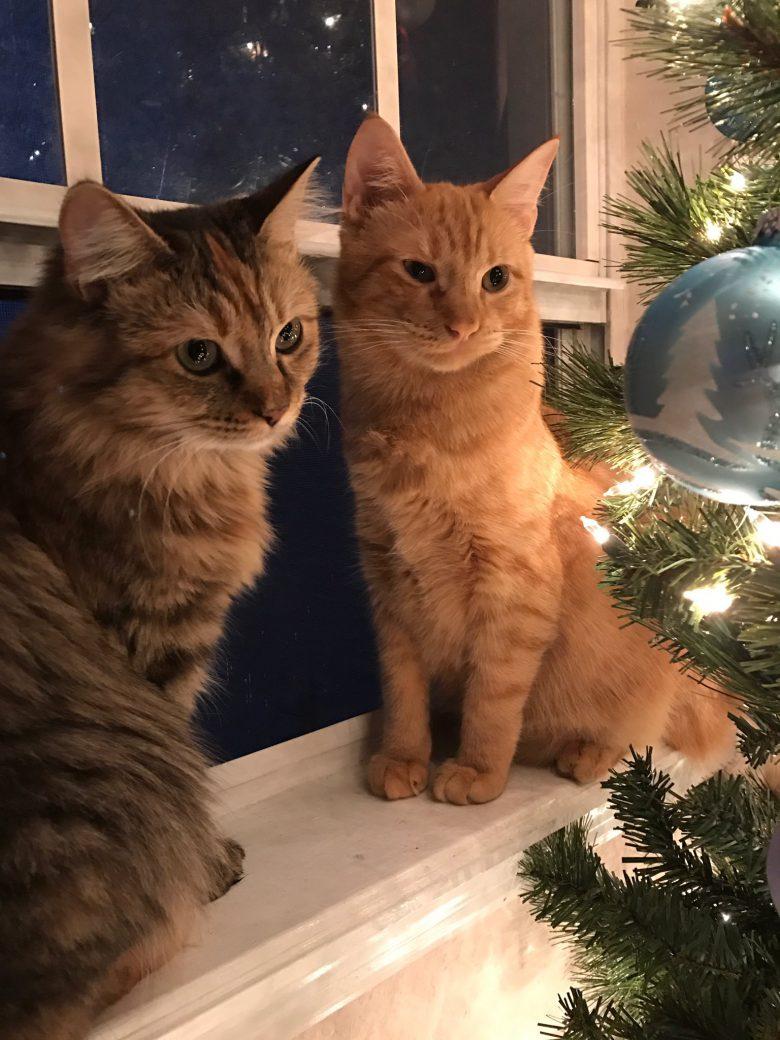 悔しい! クリスマス気分に浸る猫カップルが羨ましい(笑)