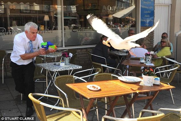 カフェテラスで人間の食べ物を奪うカモメに水鉄砲で対抗する人(笑)