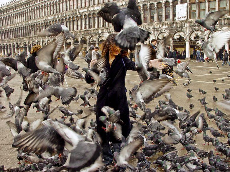 イタリアのサン・マルコ広場のハトの大群がすごい(笑)