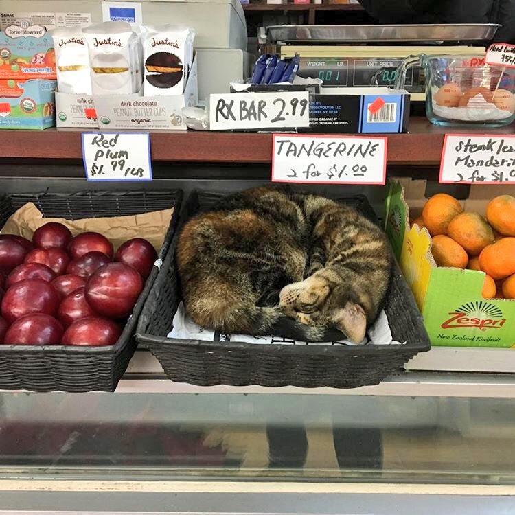 店のかごに入って売り物になる猫(笑)