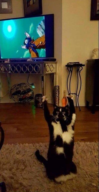 【猫おもしろ画像】ドラゴンボール悟空の元気玉の真似をする猫がおもしろい(笑)