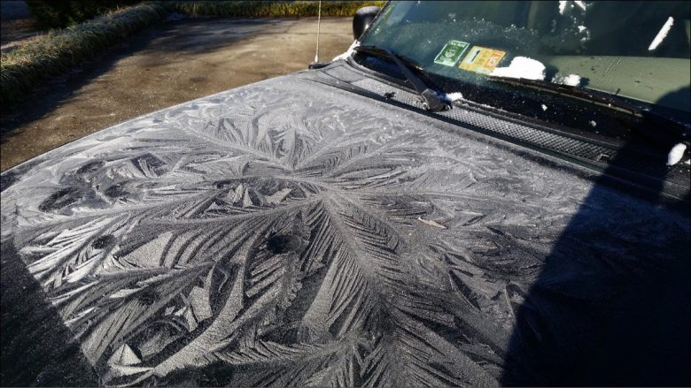 自動車の霜羊歯