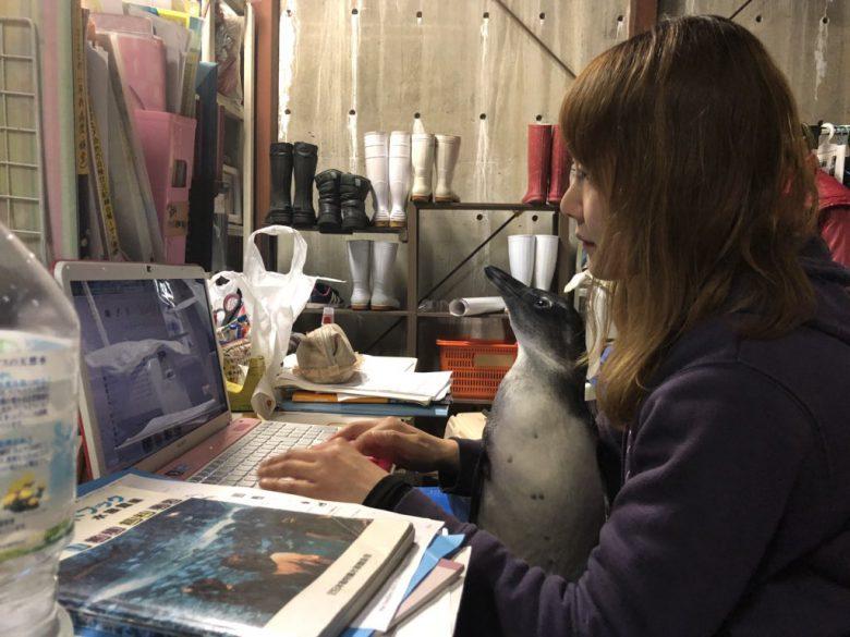 パソコン作業する人の間でくつろぐペンギンがかわいい(笑)