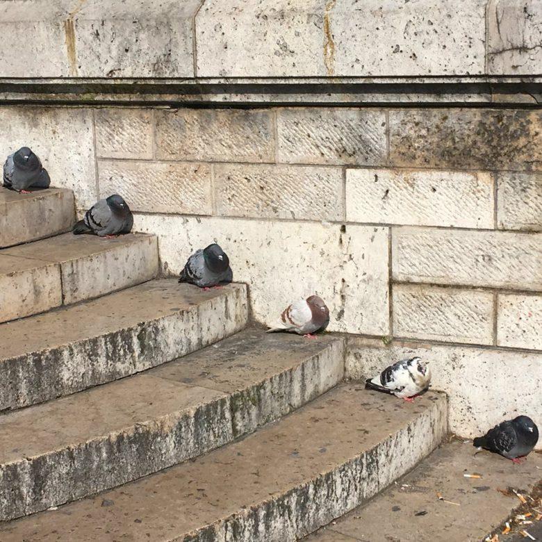 階段にきれいに並ぶ鳩たち(笑)