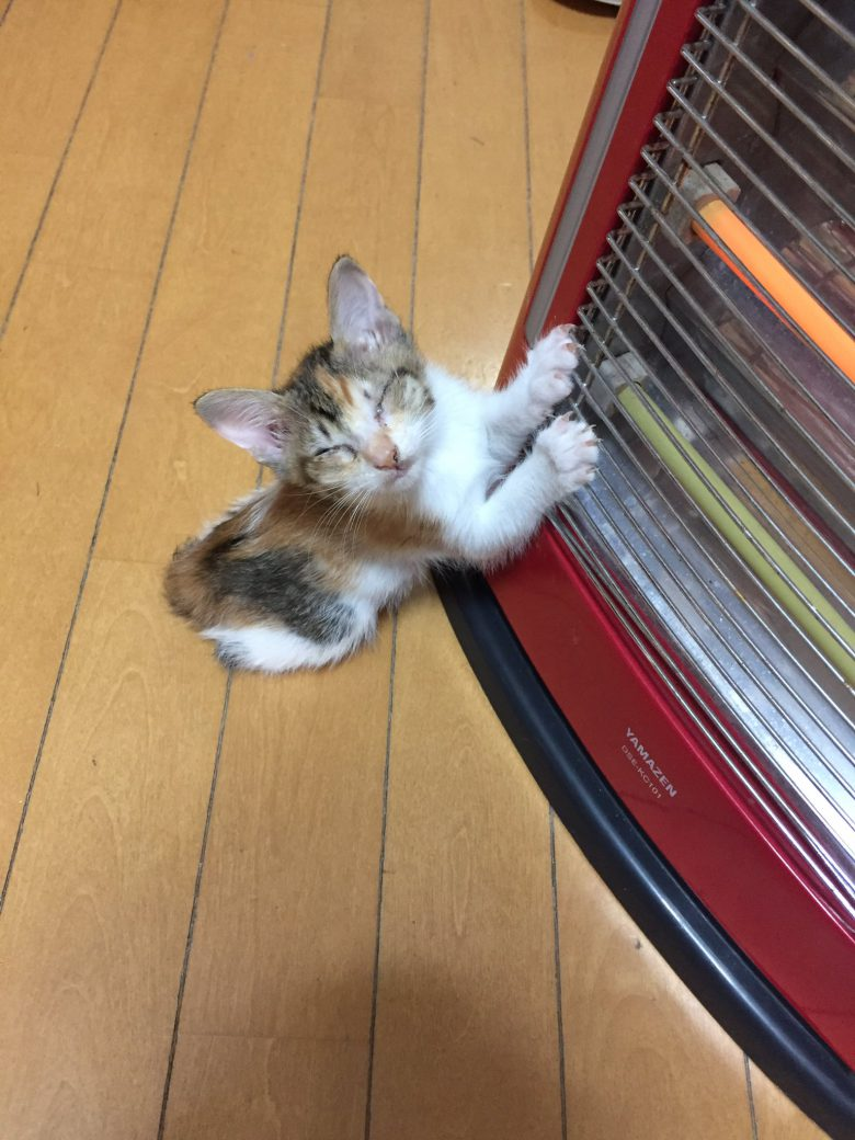 【猫おもしろ画像】ヒーターを消したら急須で温まる子猫がかわいすぎ(笑)