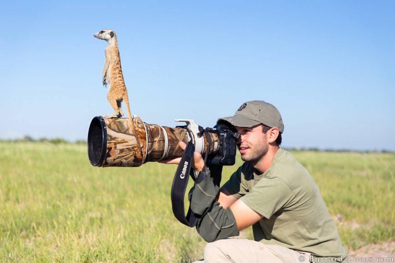 野生動物写真家のカメラの上に立って辺りを見回すミーアキャット(笑)