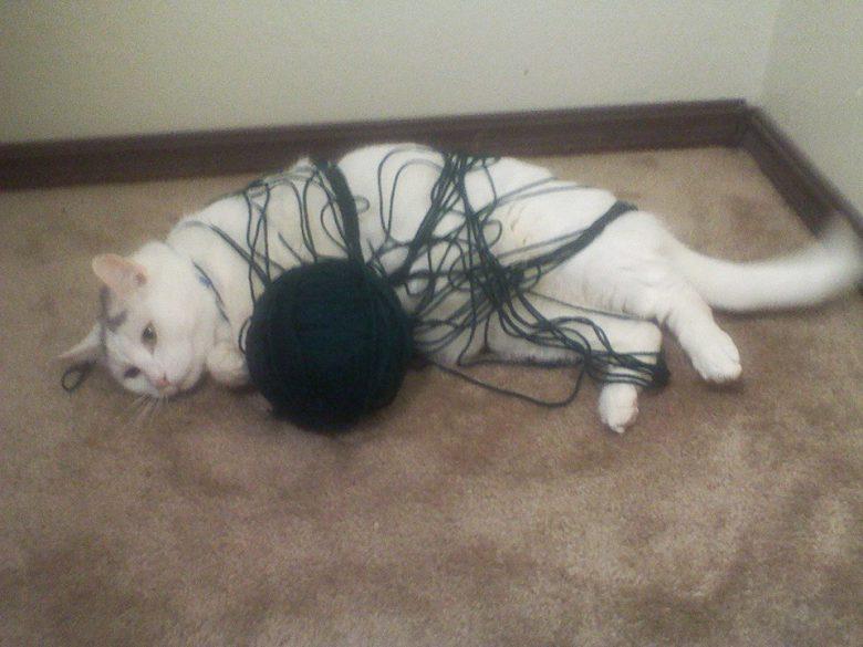 毛糸玉に絡まり、悟ったような顔をする猫(笑)