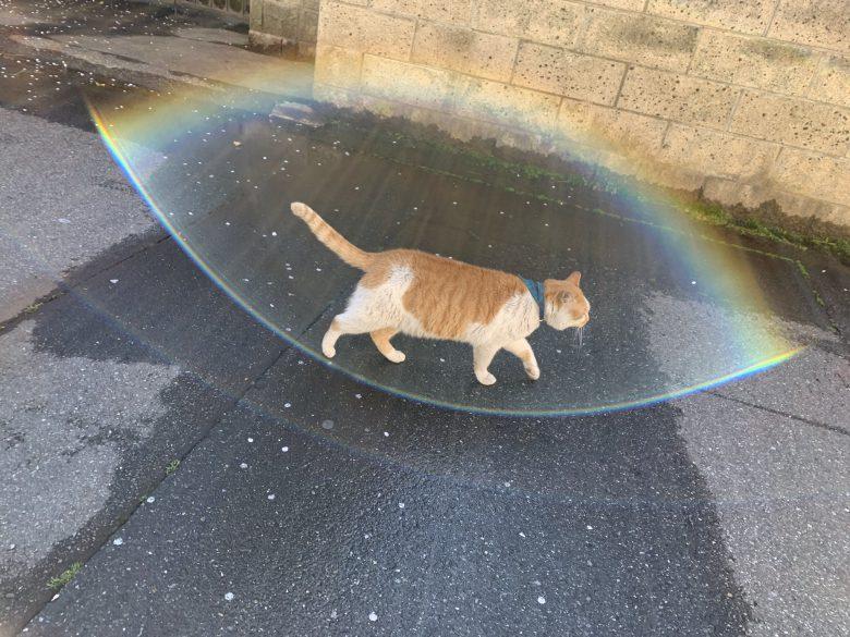 【猫おもしろ画像】バリア展開する近所の猫(笑)