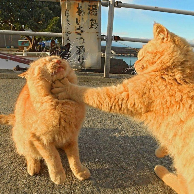 【猫おもしろ画像】湯島あいさつ通りで強めの挨拶をする猫がおもしろい(笑)