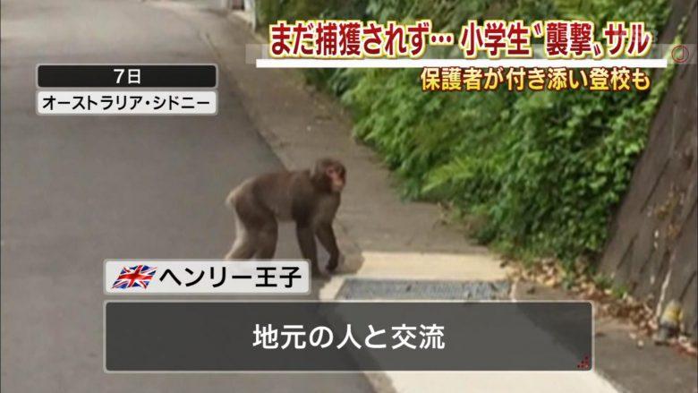 【テレビテロップおもしろ画像】猿を「ヘンリー王子」と紹介するおもしろいテレビテロップ(笑)