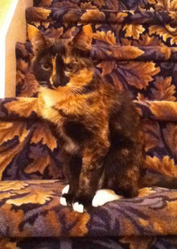 【猫おもしろ画像】派手な背景に同化して溶け込む猫(笑)