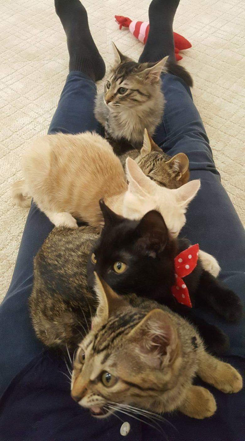 【猫おもしろ画像】猫がたくさん居座って身動き取れなくなる人(笑)