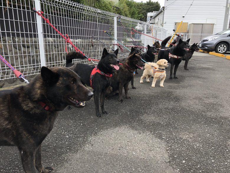 【犬おもしろ画像】和菓子屋に訪れた甲斐犬の団体に混じるモコモコした子(笑)