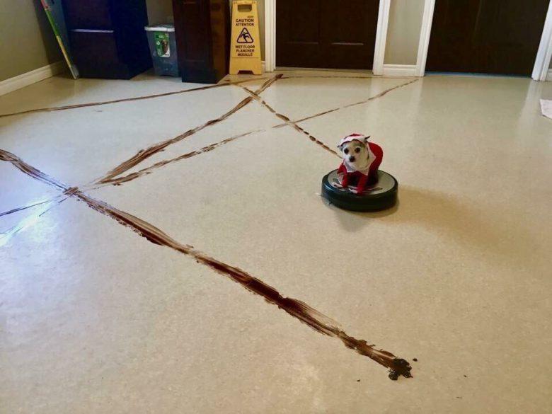 【犬おもしろ画像】犬のうんちを掃除しようとするルンバ(笑)