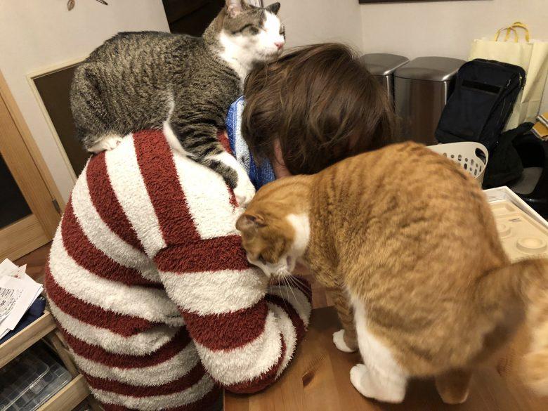 【猫テレワークおもしろ画像】猫を飼ってる人には分かる過酷なテレワーク環境(笑)